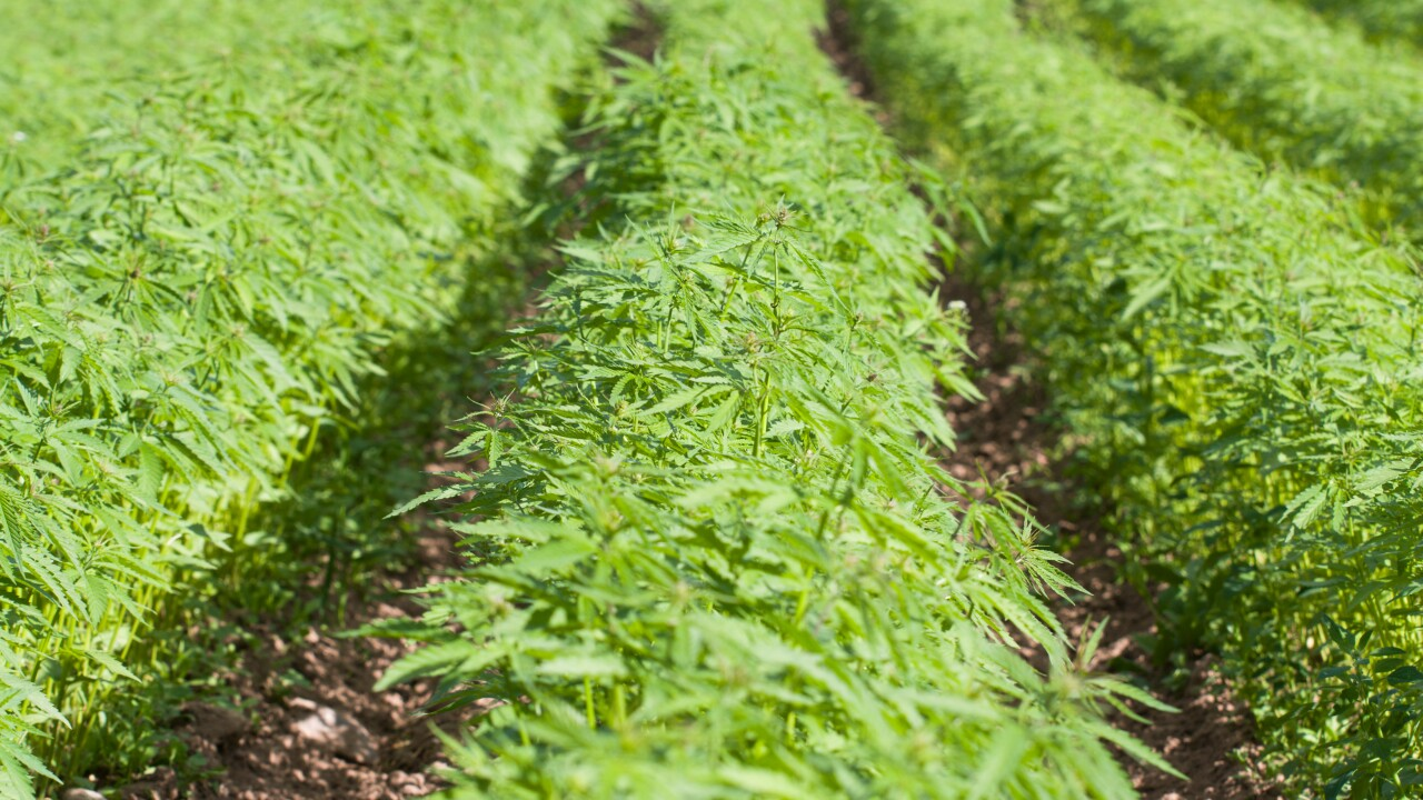 Navy releases hemp policy for Sailors,Marines