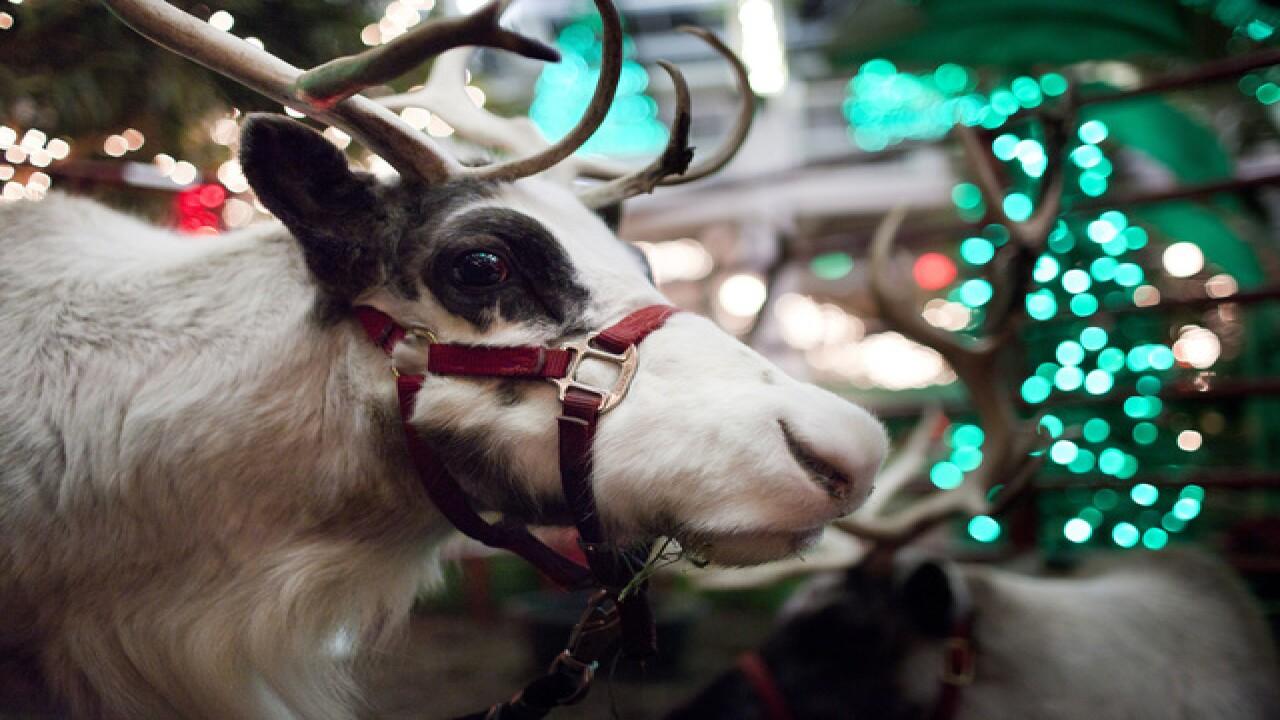PHOTOS: Christmas at the Zoo