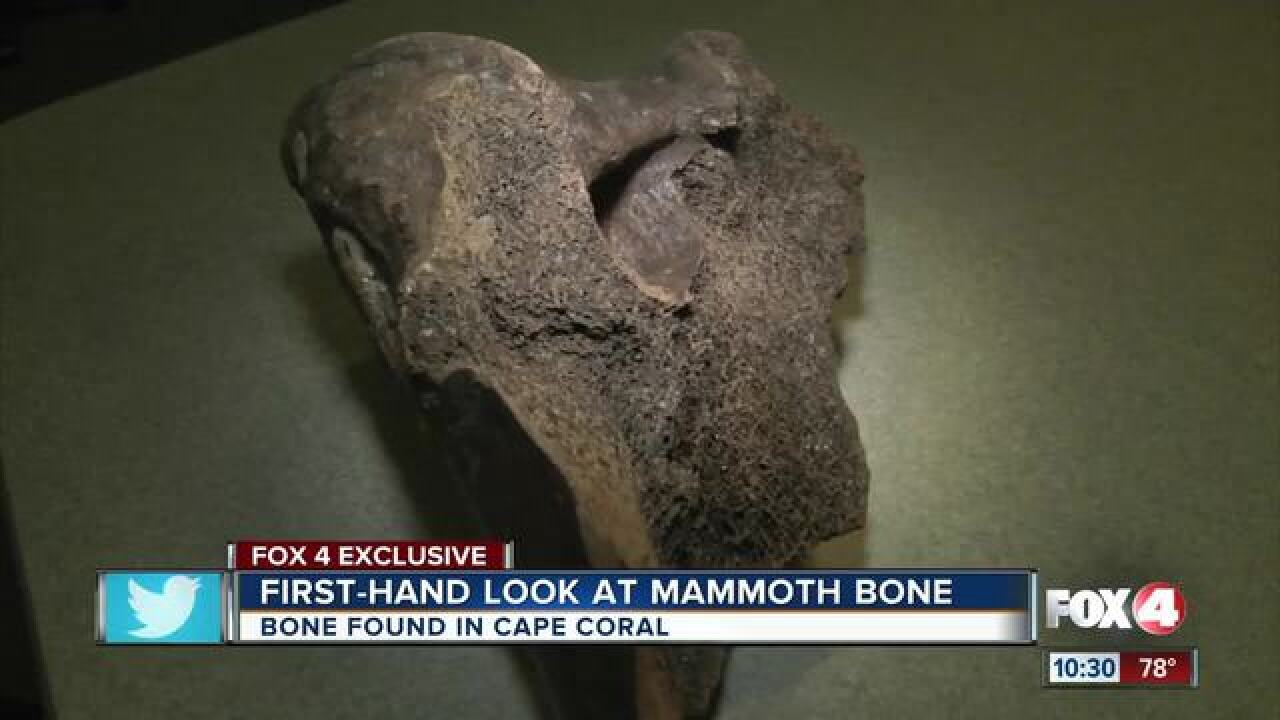 Crew discovers a woolly mammoth fossil in Cape
