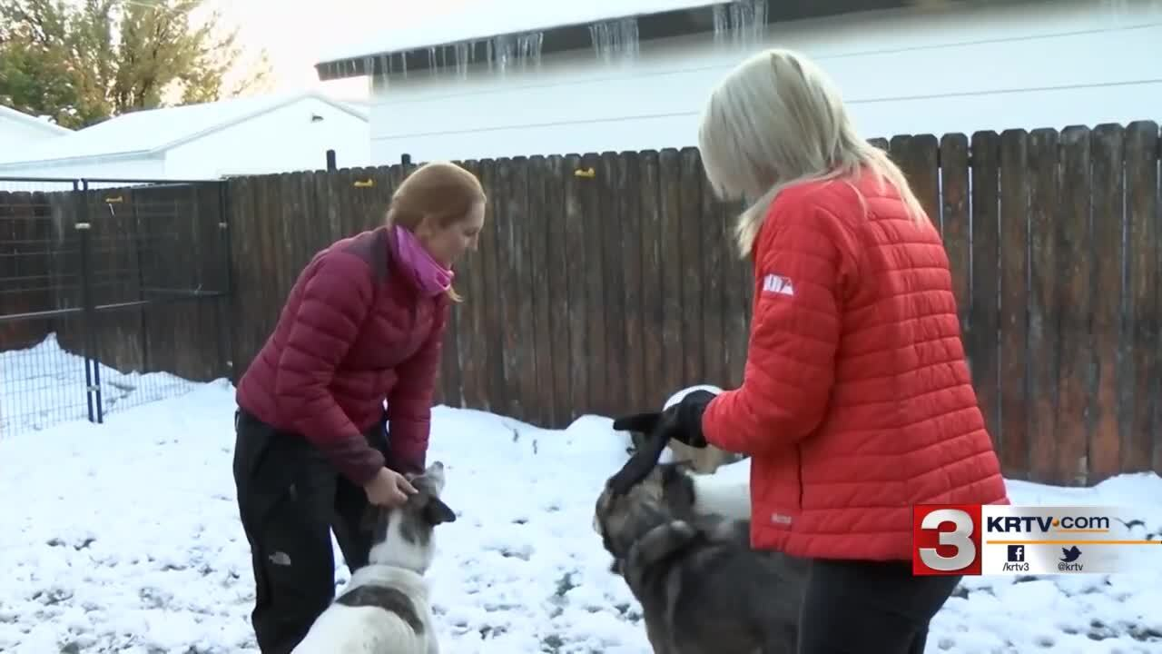 Sled dog team led Billings police on a low-speed chase