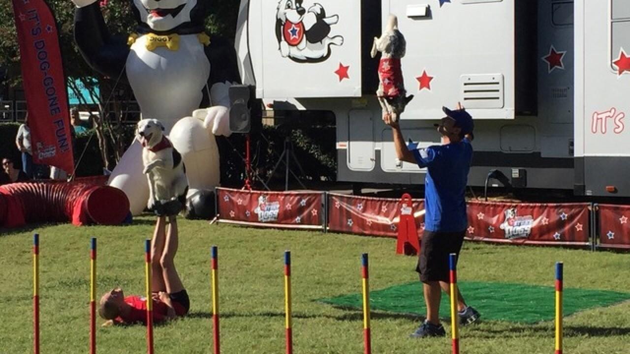 Tulsa State Fair: Goat-Tastic 2015