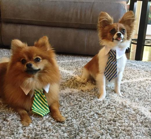 PHOTOS | National Puppy Day Gallery