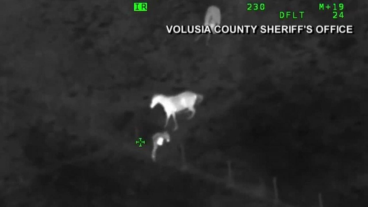 wptv-horses-chases-suspect-.jpg