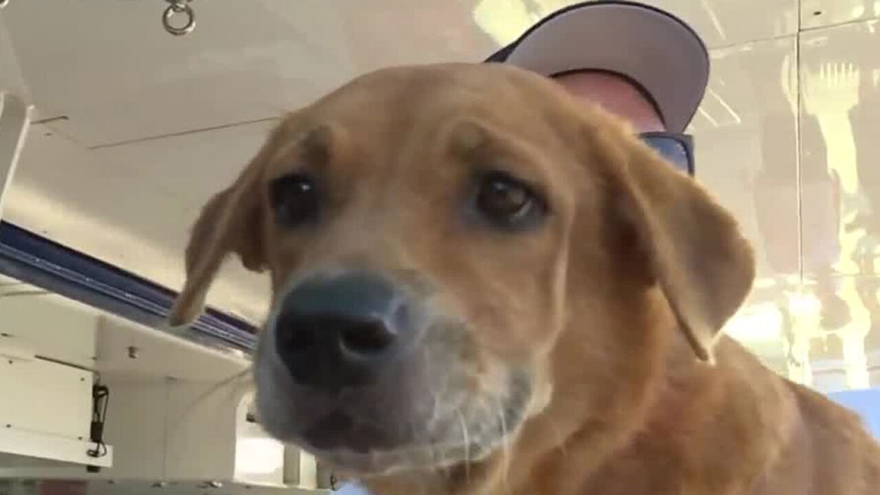 wptv-rescued-dog-bahamas-.jpg