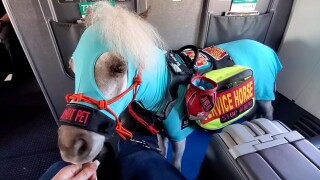 Michigan trainer brings mini service horse on his first flight