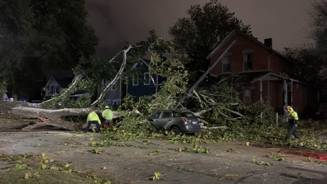 Fallen Tree West 52nd street