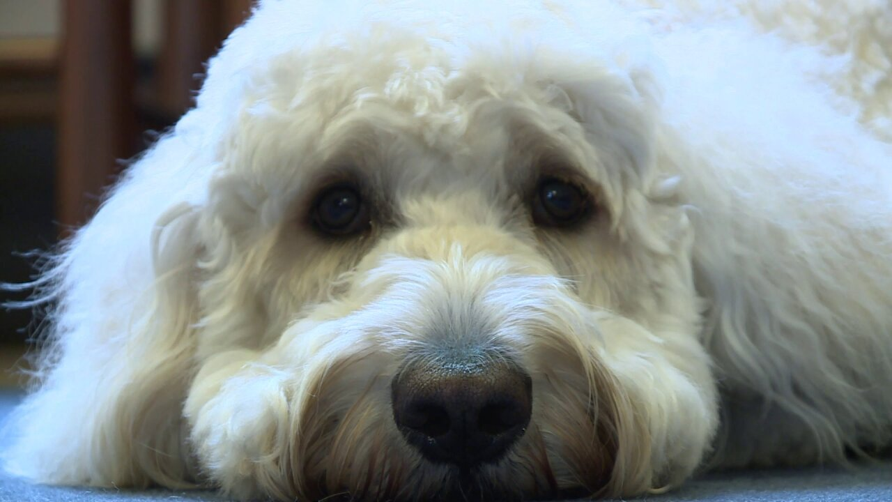 The divine circumstances that led this dog to children inneed