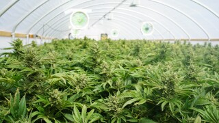 MI becomes first Midwest state to legalize recreationalmarijuana