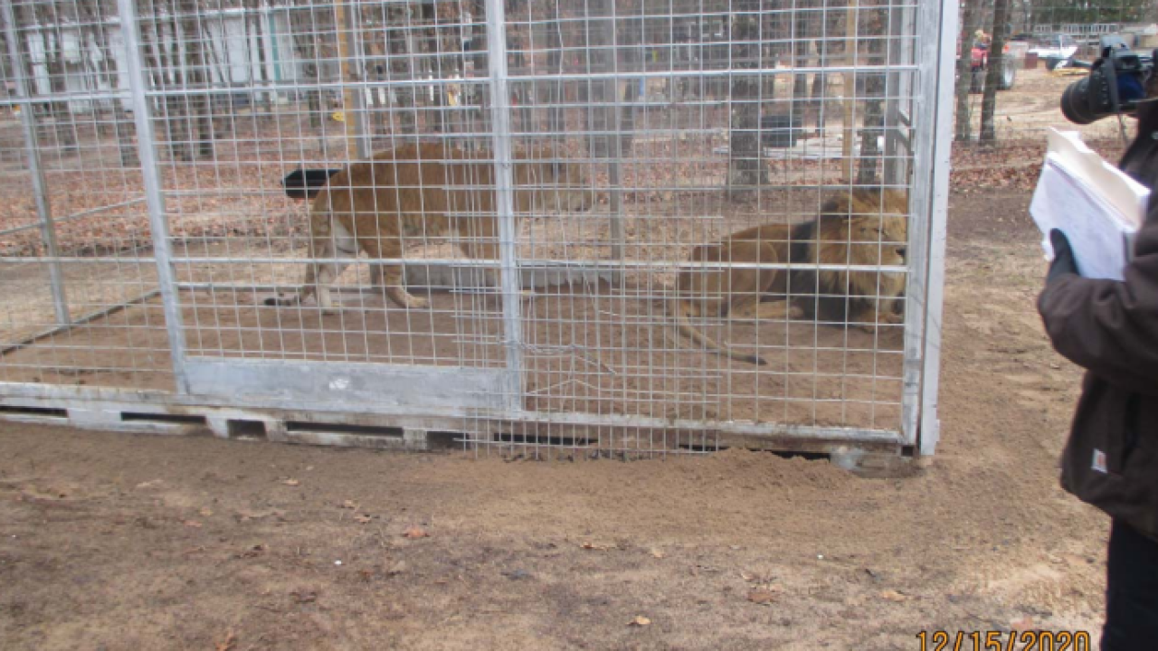 USDA inspection photo lions.PNG