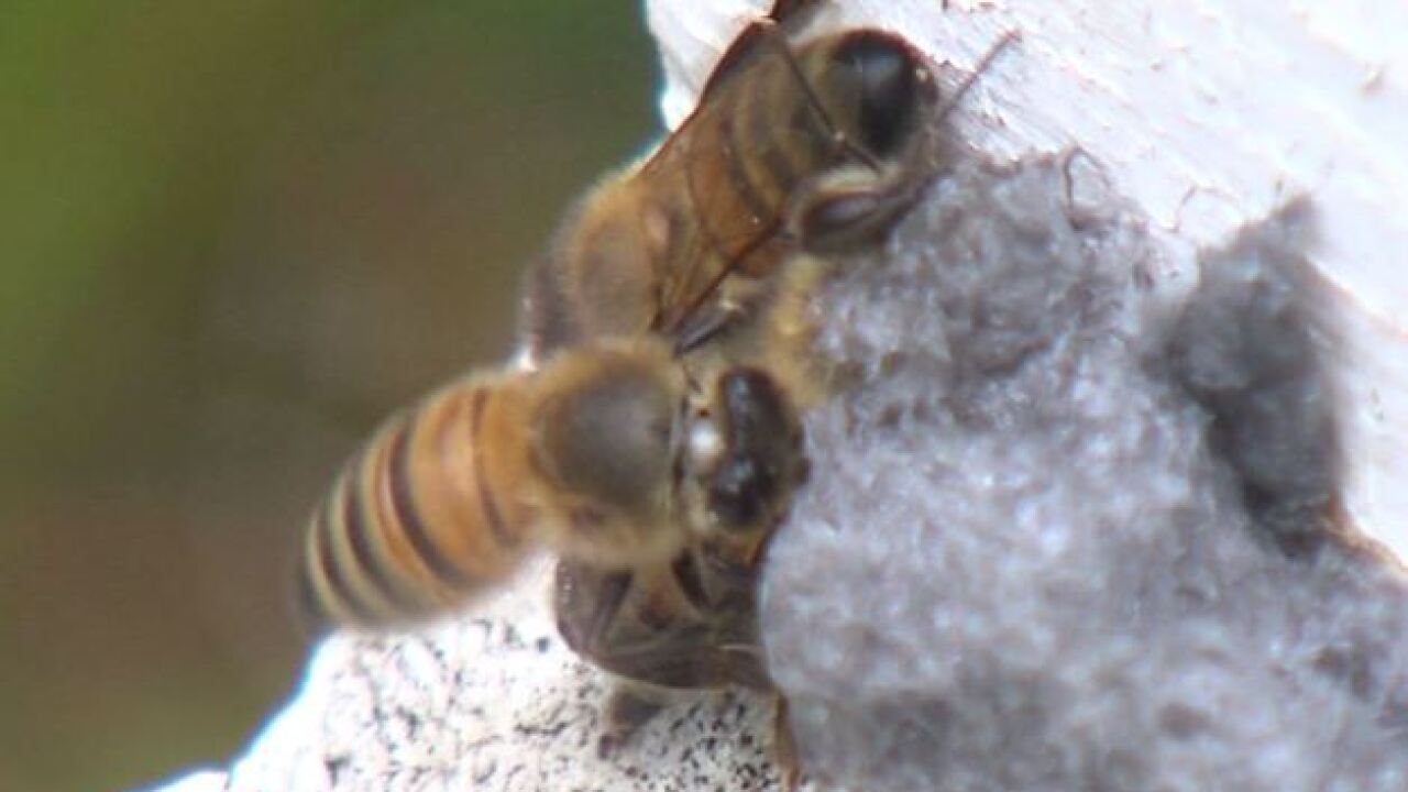 Fishers beekeepers trying to change city law