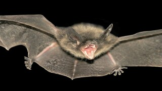Rabies death: Florida resident dies after rabid bat bite, DOH confirms