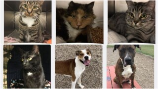 Great Falls Animal Shelter hosting 2-day adoption event