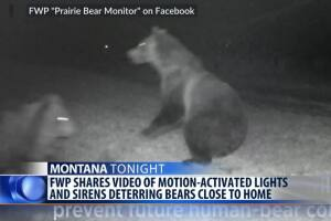 Deter foraging bears near homes with light and sound