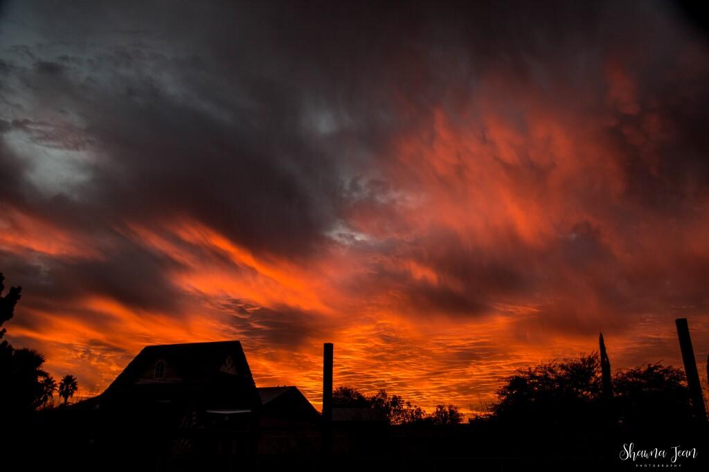 SUNSET0 Shawna Halbur Sunset.jpg
