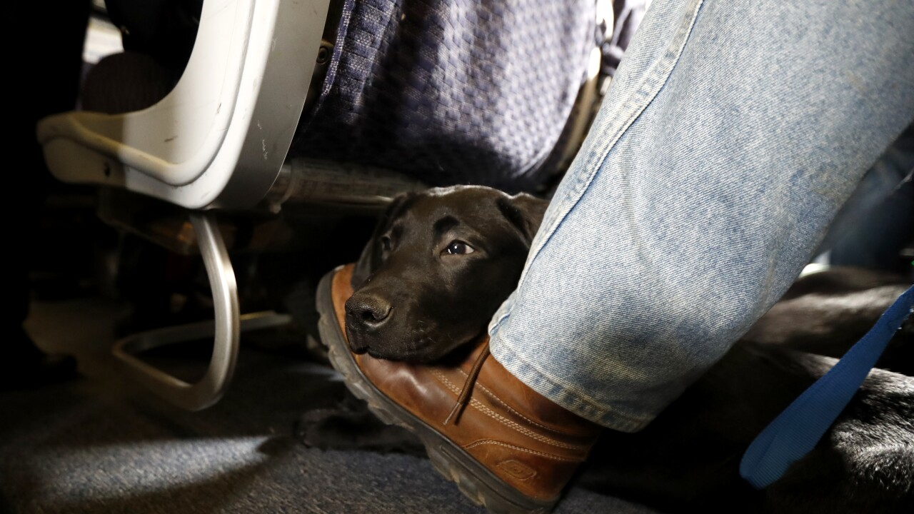 Dept. of Transportation tightens definition of service animals allowed on planes