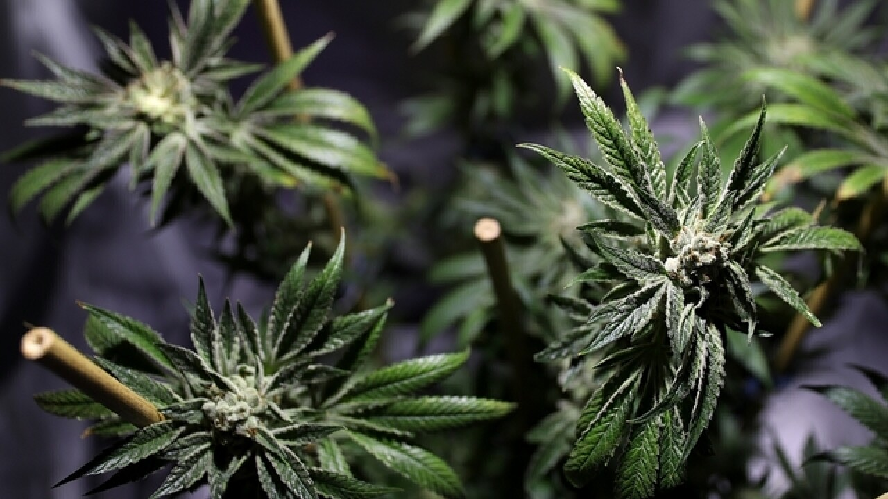 California, Massachusetts and Nevada approve recreational marijuana