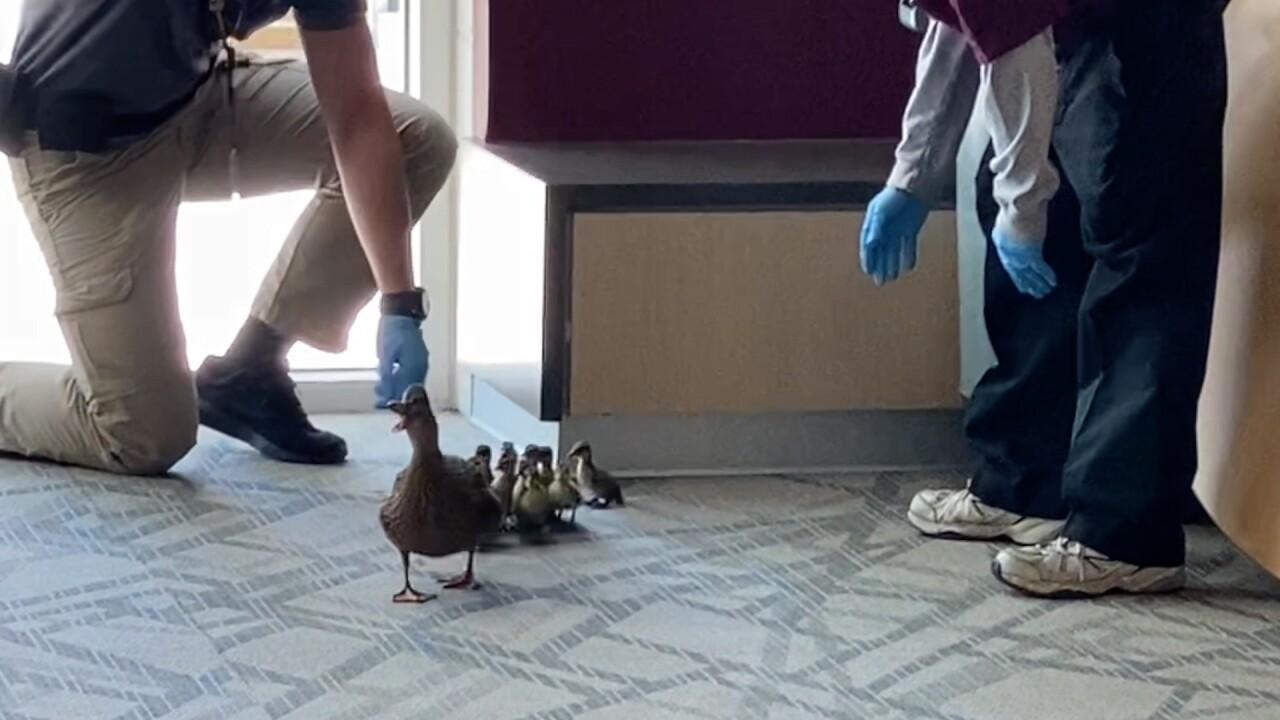 Duck Escort Grandville Middle