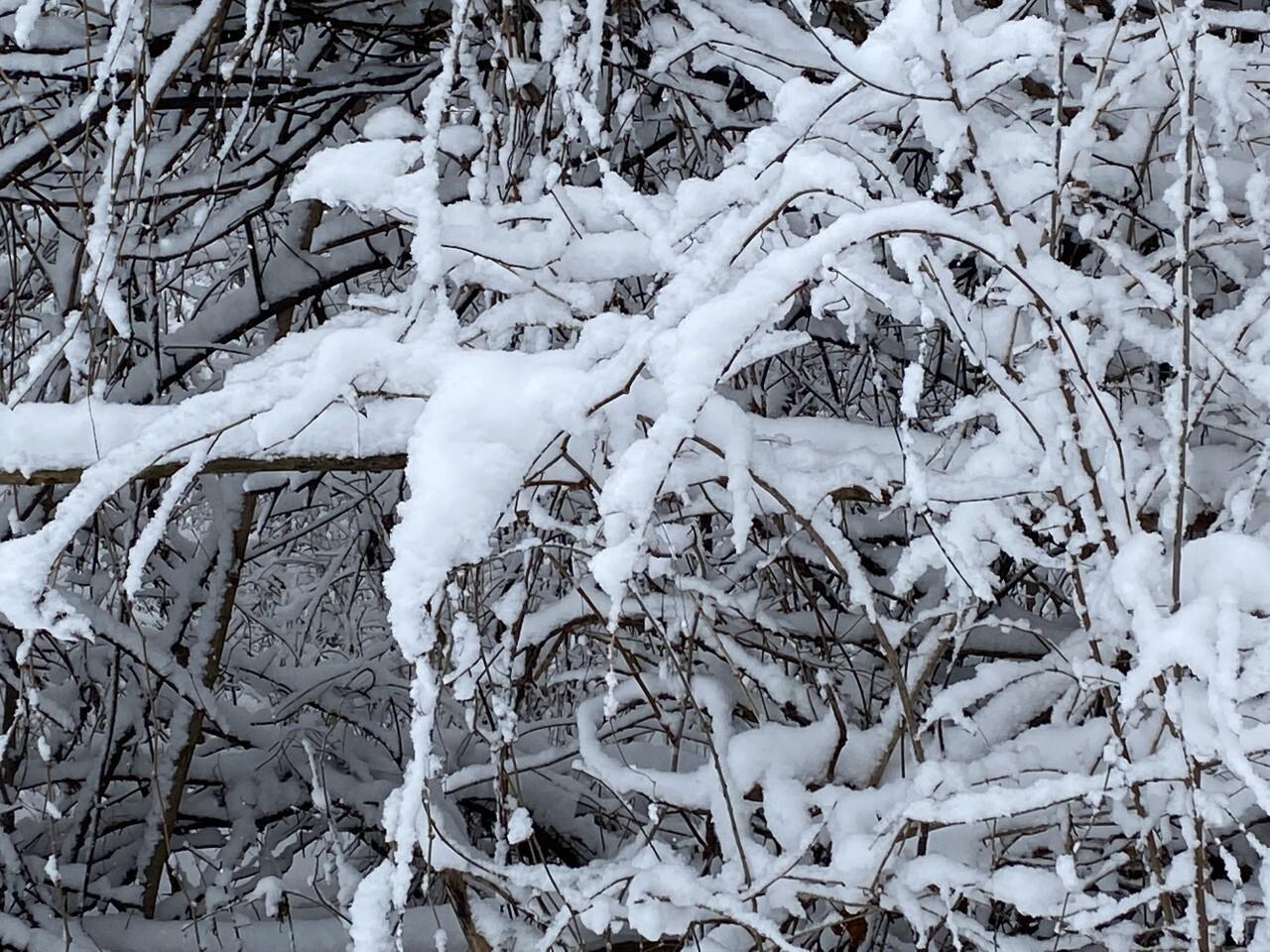 snow on trees.jpg