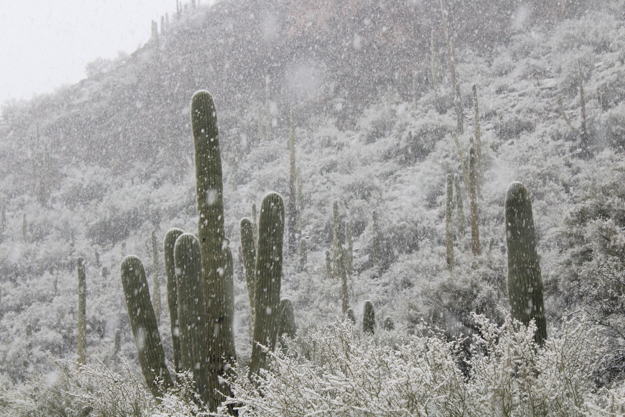 Roger-Bissonnette-Sabino-canyon-in-the-snow_2.jpg