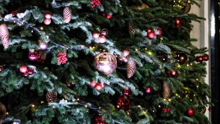 Your Christmas tree might cost a bit more this year. Here's why.