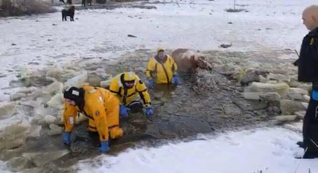 horse rescue 2.jpg