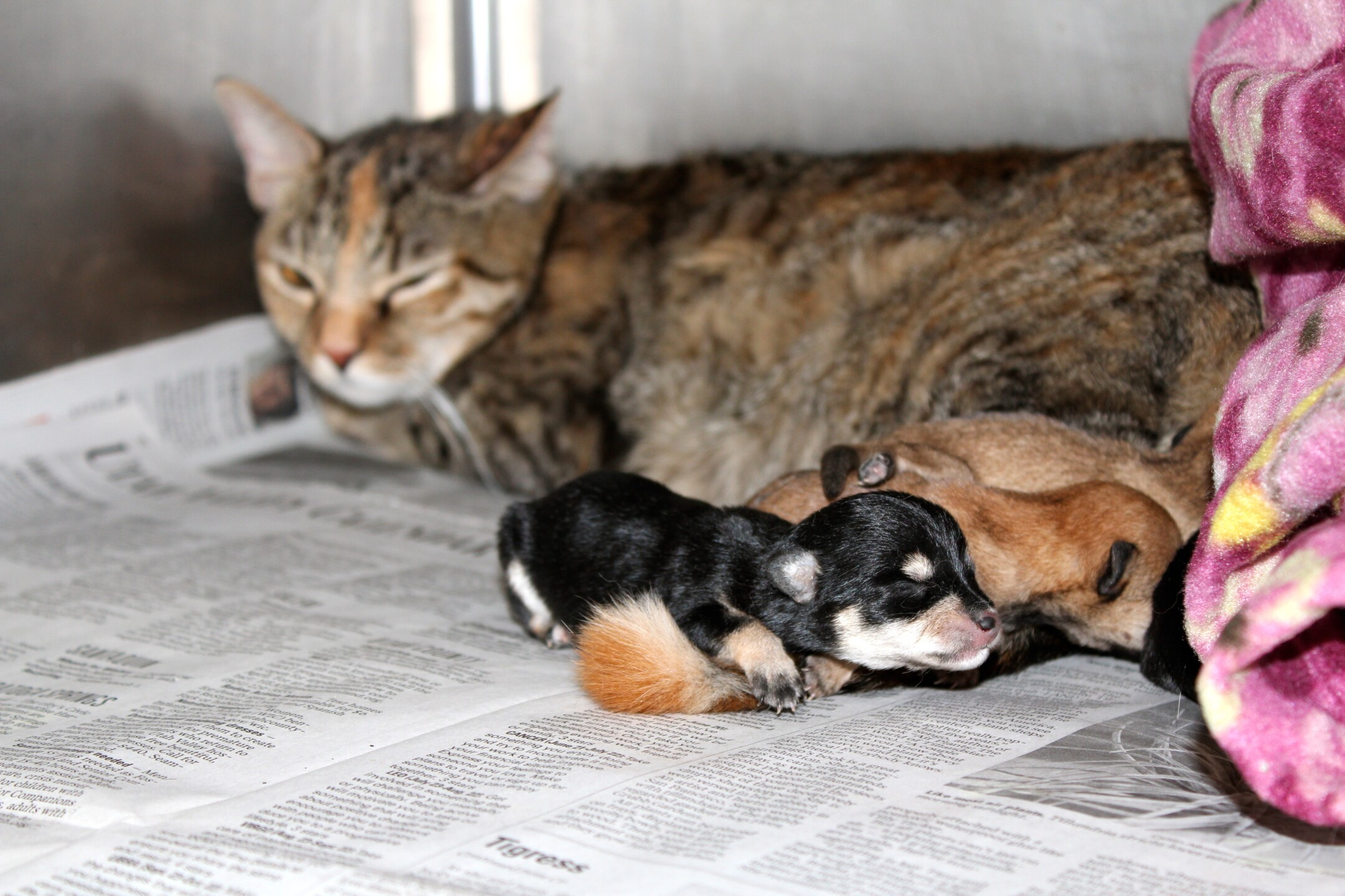 Photos: 4 newborn pups nursed by mama cat now beingbottle-fed