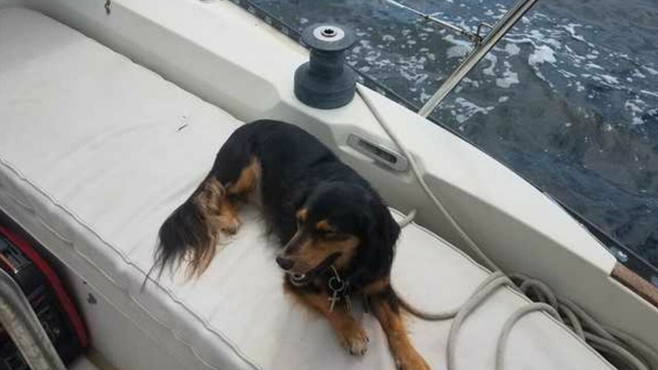 Man reunited with dog lost in Gulf during storm