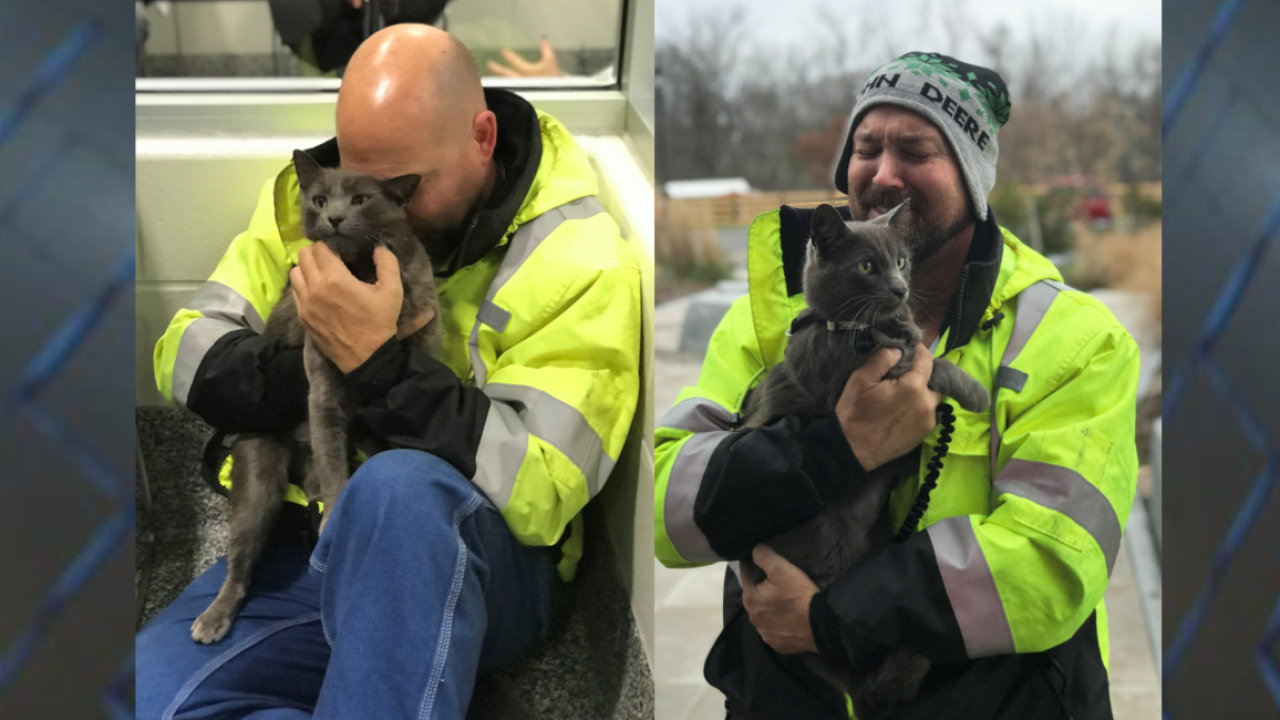 Georgia man reunited with cat he lost at truck stop in Ohio