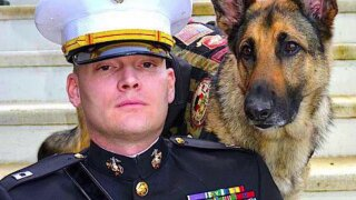 🐕🇺🇸Leashes of Valor: Dog 'miracle workers' are 'lifesavers' for veterans