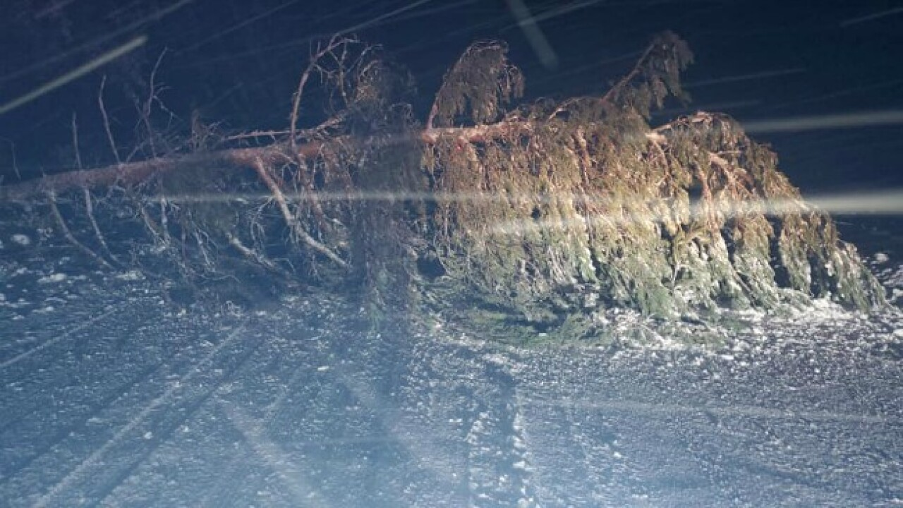 Hundreds of trees fall onto roads in UP due to weight of ice, snow