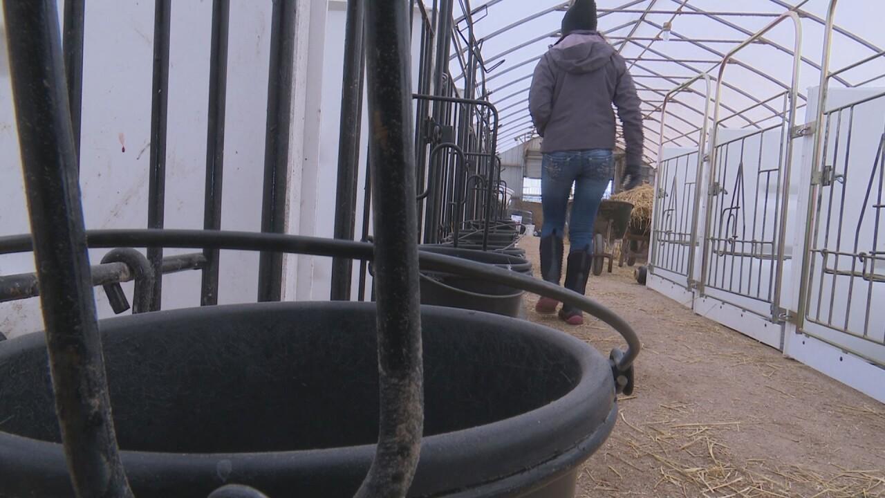 Farming Mentor Program 2