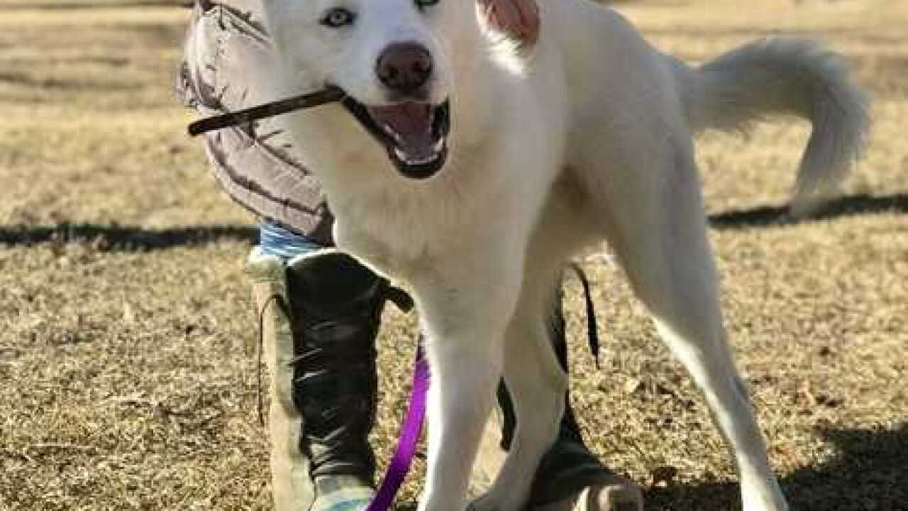 3-legged, neglected dog adopted by new family