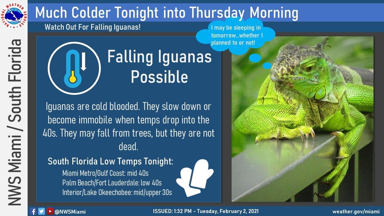 iguana.jfif