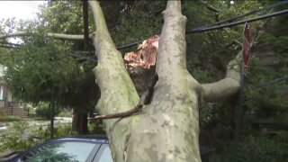 Tree toppled over power lines after Tropical Storm Isaias