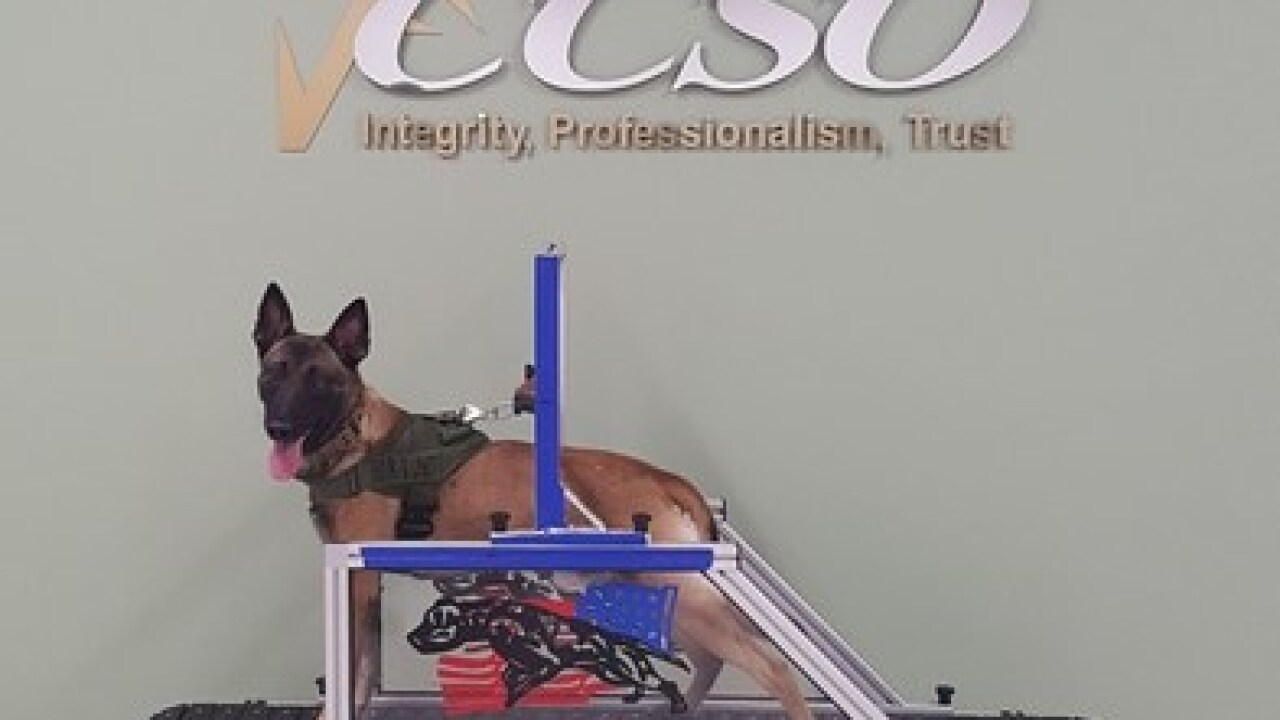 Canine units get a dog powered treadmill at CCSO