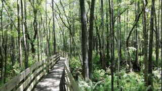 Repairs force closure of Six Mile Cypress boardwalk for two weeks