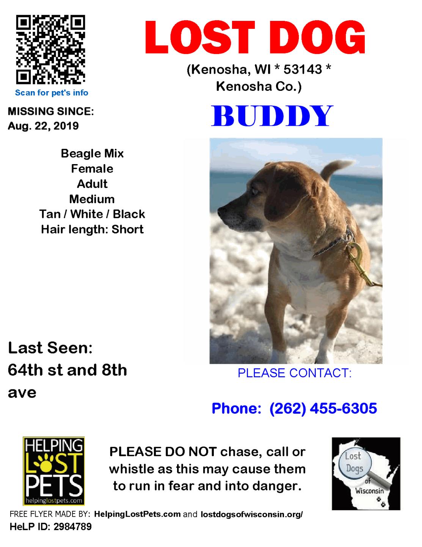 0822 Buddy Beagle Mix Adult.png
