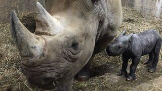 rhino2.jpeg
