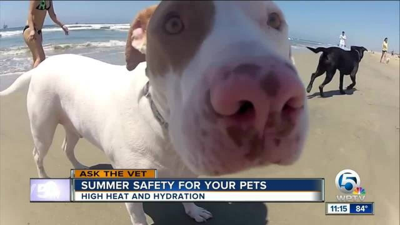 Summer safety advice for your pets
