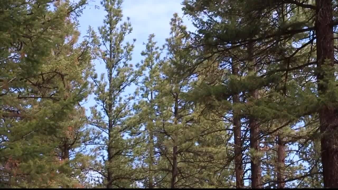Bitterroot Forest