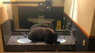 Young black bear crawls into Big Sky hotel's bathroom