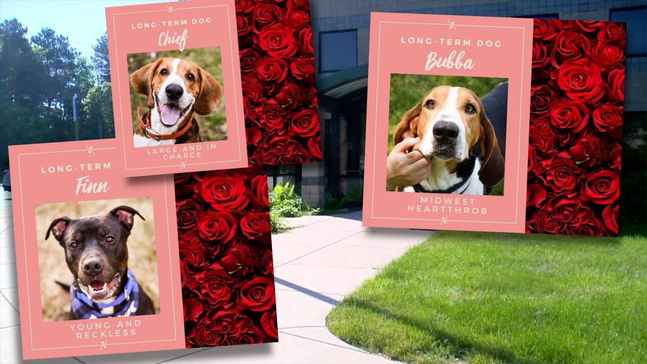 Humane Society Long Term Dogs