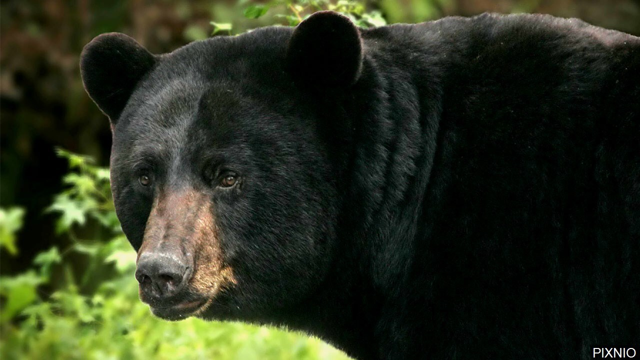 Bear euthanized after biting teen camping near Moab