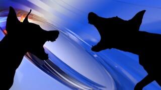 Virginia Beach Animal Control investigating dog attack atOceanfront