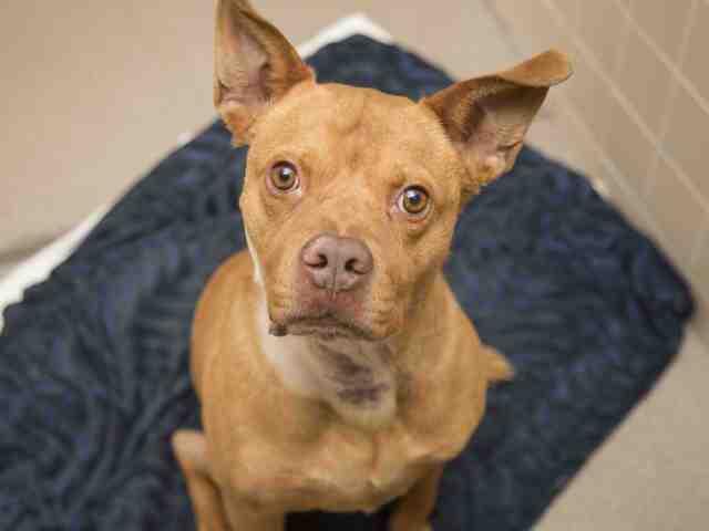 Adoptable pets from Arizona Humane Society and Maricopa County Animal Care (5/9)
