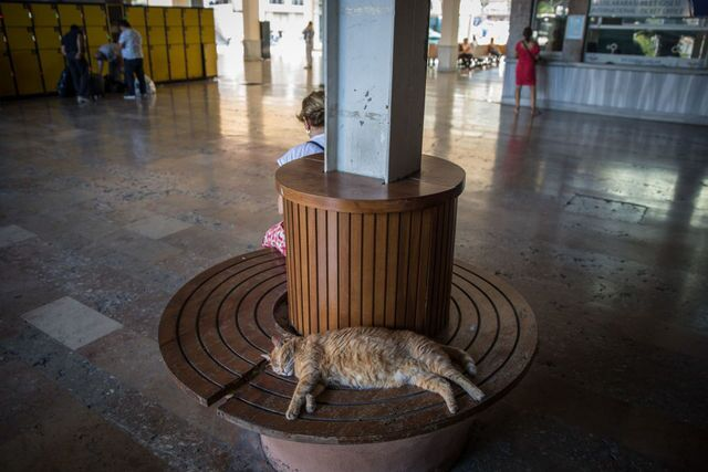 Photos: This place is known as 'The City of Cats'