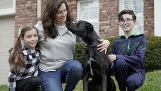 Pet fostering takes off as coronavirus keeps Americans home