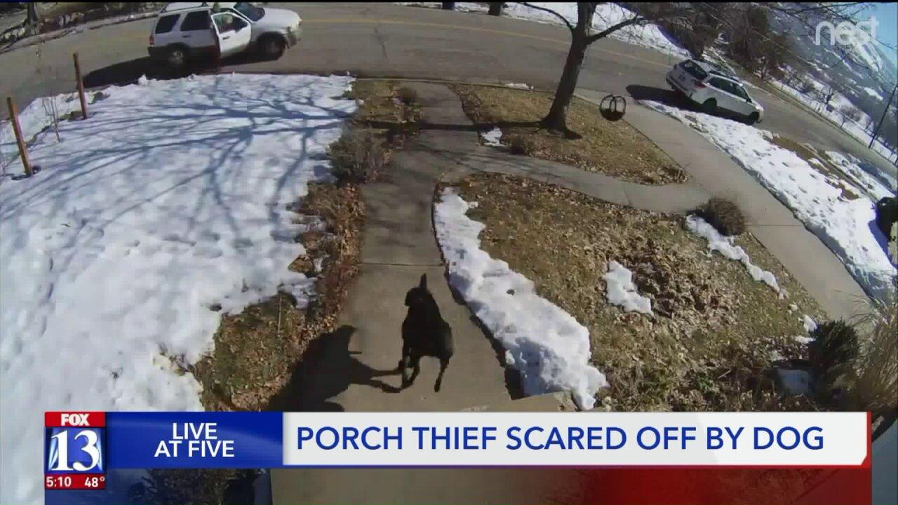 Caught on camera: Utah dog foils porchpirates