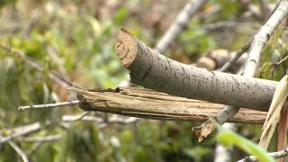 Tree branch disposal