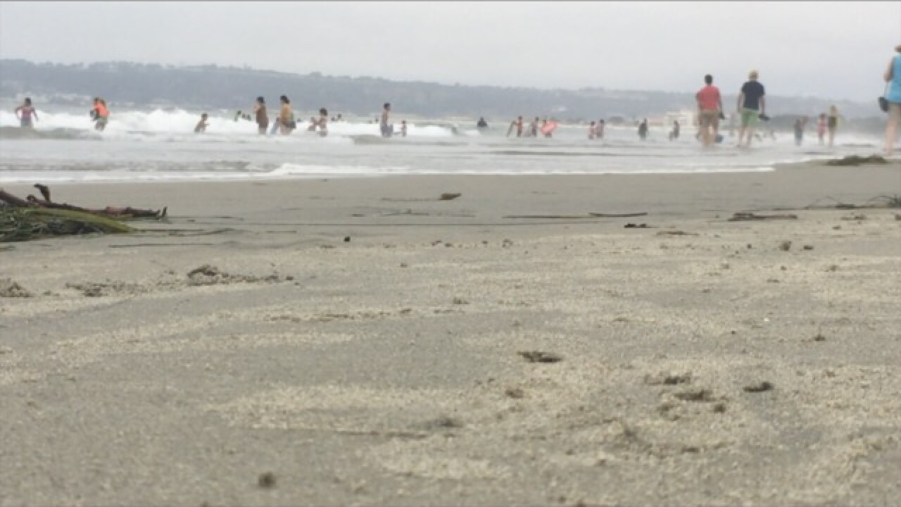 San Diego is hot spot for shark attacks